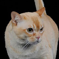 23rd Best Cat in Premiership - GP, RWLUCKY OWL RED